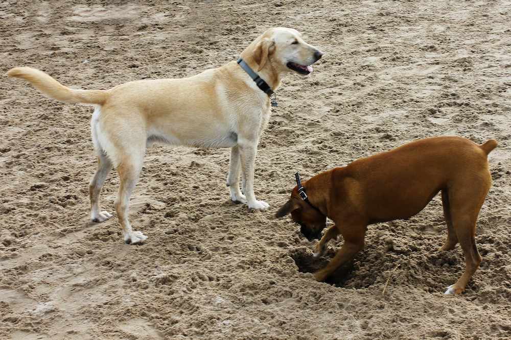Hundestrand in Scharbeutz