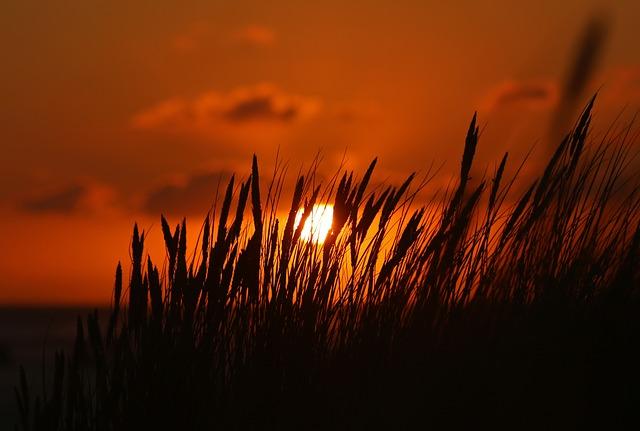 Amrum Sonne